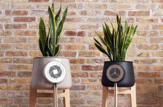 Очиститель воздуха Clairy использует растения