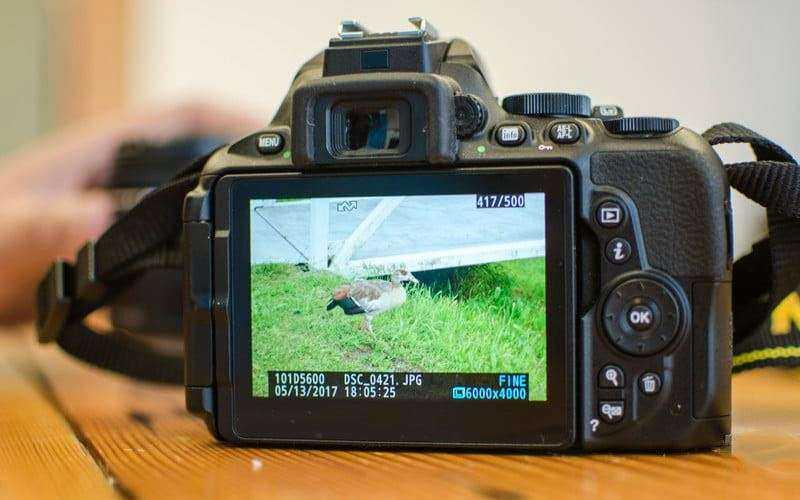 Тест Nikon D5600