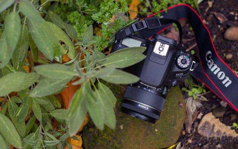 Обзор Canon EOS 77D — Средний ребёнок, которого вы по-прежнему любите