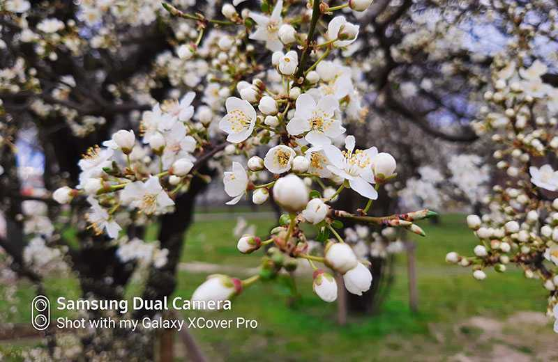 Samsung Galaxy Xcover Pro фотографии