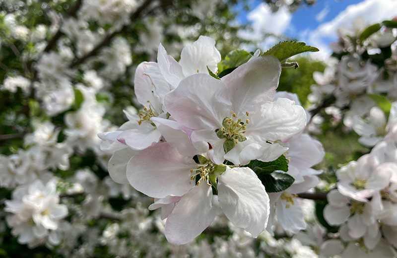 iPhone SE 2 фото