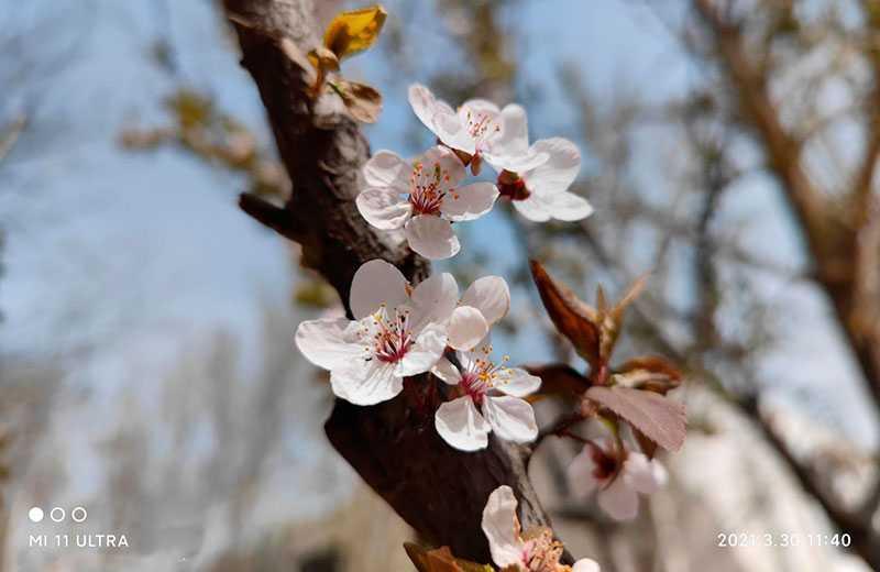 Xiaomi Mi 11 Ultra фото